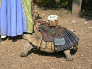Now why would anyone take their pets to the Renaissance Festival is beyond me? I can understand wanting to dress your dog or cat. But dressing a turtle? That's kind of ridiculous.