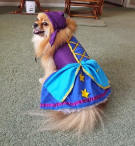 Now I'm sure any dog love would think this is adorable. But I think a lot of dogs would see this as simple humiliation.