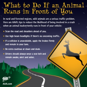 Large wild animals can pose serious traffic problems. Thus, if you see any large wild animal on the road, remember to slow down and give it the right of way. Let's just say it'll save your life. Here's some more tips about sharing the road with wild animals.