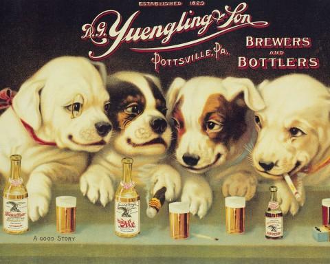 Yuengling-Dogs1-480x384