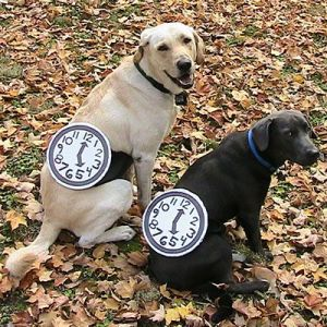 For your pets, this is a relatively simple costume. I mean at least it doesn't take much time to put the watches on.
