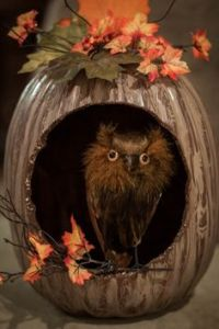 Now this is quite rustic for a pumpkin diorama. But still, really like the owl in its hole. Not very scary but very fitting for fall.