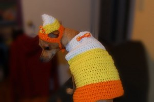 Not sure if dressing your dog in a candy corn sweater and hat is the right thing to do here. Seriously, that dog doesn't look very happy in this.