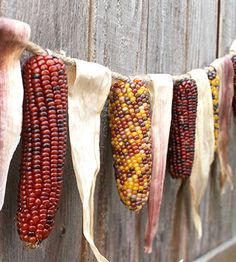 As I found out while doing my movie history series, Indian corn didn't look like this in the 1620s. The kernels were said to be much smaller.