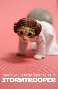 Well, even fans tend to dress their pets once in awhile. Still, I like the cat's Princess Leia wig for some reason.
