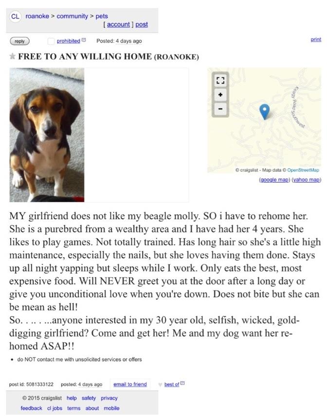 dog-ad-funny