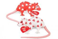 Love-Rat_19122-l-500x333