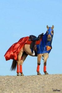 Yes, this is a horse in a Superman costume. Don't ask me how they got the horse into it.