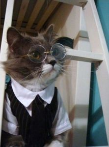 It's a cat that's dressed up as Harry Potter. But at least it won't mind having a room under the stairs.