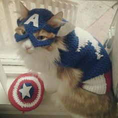 Yes, this is a cat dressed up as Cap. However, I'm not sure if it possesses the same patriotic spirit.