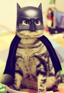 Bat Cat doesn't play nice with unlawful mice like the Joker Rat. Gotham critters, you have been warned.