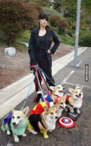 Yes, these are corgi Avengers with Nikki Fury as their handler. And yes, resisting them is futile.