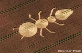 ant-crop