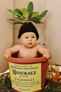 Not sure why they have babies wearing mandrake costumes. Yet, at any rate, this is cute.