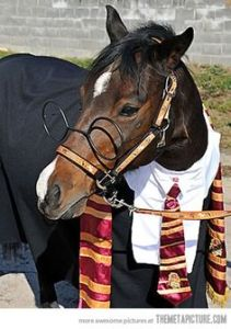 Yes, that's a Harry Potter horse. How that came to be, I don't have the slightest idea.