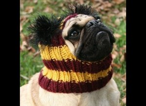 I guess this is for a pug which kind of makes sense. Why it exists, I have no idea.