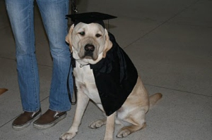 Okay, I don't think it's the dog's graduation. But that look in the cap and gown is so priceless.