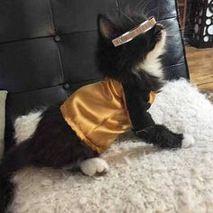 Yes, it's a cat dressed as La Forge as you can see. I'm sure some people might find this incredibly cute.