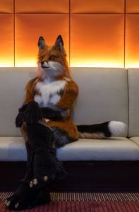 So what is this fox waiting for? An easy meal. Beats me.