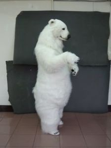Well, that looks quite realistic for an animal costume. But real polar bears aren't friendly. Remember that.