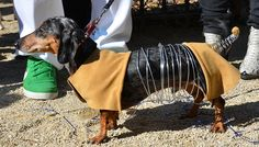 Yes, it's a Slinky Dog costume for a dog. And apparently, it's utterly brilliant.