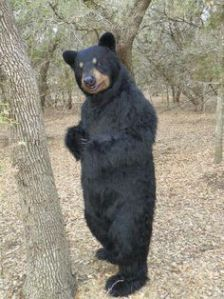 This is probably a costume you shouldn't wear at a campground or park, for obvious reasons. Because black bears are more common than grizzlies.
