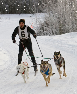 dumb_olympics_skijoring_3_dogs