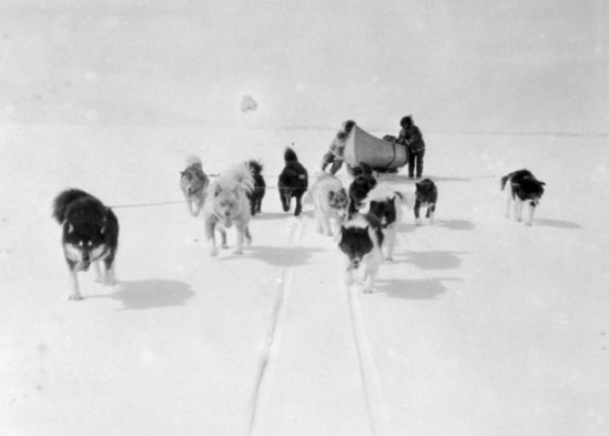 Sled-dogs-archives-e1312915857730