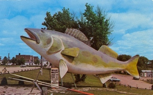 The area's historical society has a whole page dedicated to this guy as well as plenty of tall tales. So he's sort of like the Paul Bunyan of fish?