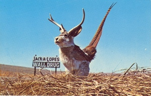 So there's more than one kind of jackalope? Had no idea. Still, this consists of a rabbit, small antlers, and pheasant wing and tail.
