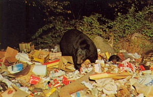 "So let me get this straight, the Central Adirondacks' idea of promoting tourism is a postcard of a dumpster diving bear. As Bad Postcards says, ""We're on vacation! Let's go to the dump!"""