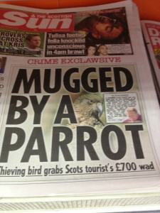 Didn't know that parrots could resort to such criminal behavior. Maybe that's why pirates kept them.