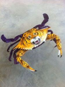 Yes, it's a LSU crab and it's painted as a tiger for decorative purposes. I know what you're thinking but to me, it's cool.
