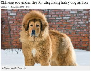 Uh, excuse me, but that does not look like a lion to me. Why did the Chinese zoo think that they'd get away with this?