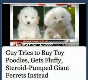 Okay, that picture on the right does not look like a dog at all. How this guy couldn't tell the difference between a dog and a ferret, I don't understand.