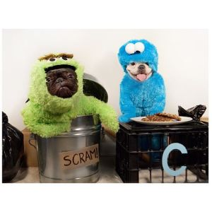 By that, I mean Sesame Street. One dog is dressed as Oscar the Grouch. The other as Cookie Monster.