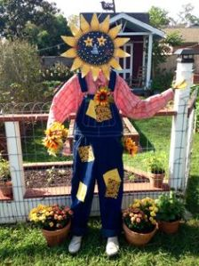 Well, a sunflower head, anyway. Still, seems to make everything seem sunny even in patched overalls.