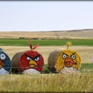 Well, they're Angry Birds as hay bales. Basically consists of spray-paint and straw. Fans will love it.