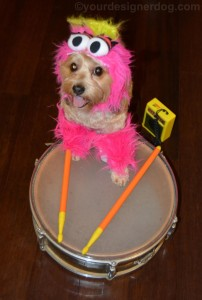 Yes, it's a little dog dressed as Animal from the Electric Mayhem. He even has drums to boot.