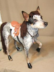 Yes, it's a dog dressed as a horse. And no, you are not hallucinating.
