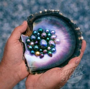 Okay, you don't find that many pearls in an oyster. But you have to admit, this is pretty amazing.