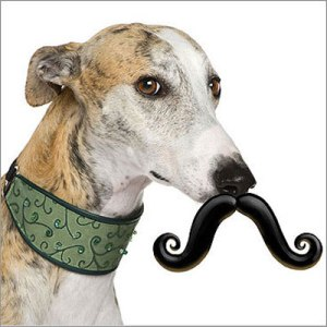 "From Marie Claire: ""Much like photographing infants decorated with fake leaves in flowerpots, the dog moustache is just plain cruel. But hey, this type of torture only costs $10 — those photos of babies in flowerpots are way pricier."""