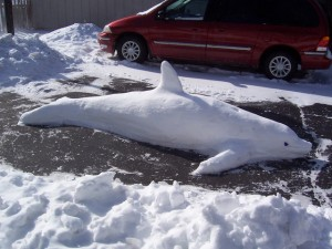 I would certainly say so. But this dolphin is made from snow so it's nothing to worry about.