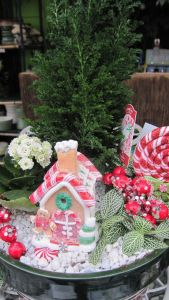 This one is surrounded by candy canes and holly berries. Like the gingerbread man.