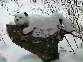 a.baa-Cute-dogs-from-snow
