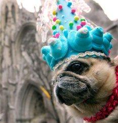 dog-bonnet6